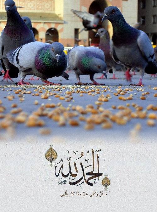 sukr3